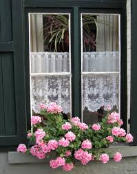 belgium window with lace google search theme dutch
