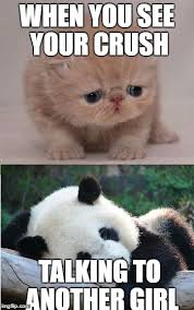 Cute Memes For Your Crush - cute animals imgflip