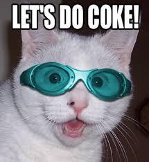 Cat Cocaine Meme - let s do coke cat macros
