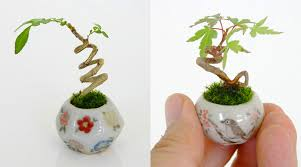 ultra small bonsai plants give meaning to the word miniature