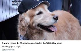 Meme Dog - 27 hilarious memes of dogs wearing hats tail threads