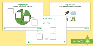 frog life cycle worksheets minibeasts frogspawn tadpole