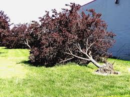 spring garden family practice improper and damaging gardening practices