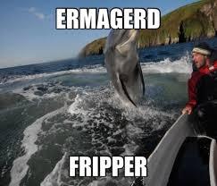 Ermahgerd Animal Memes - ermahgerd animal meme 照片graph animal 从mignon 25 照片图像图像