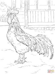 farm animals coloring pages free printable pictures