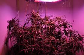 Led Grow Lights Cannabis Led Grow Lights M Lite Solutions