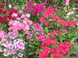 5 simple steps to start a flower garden u2013 easy simple landscaping