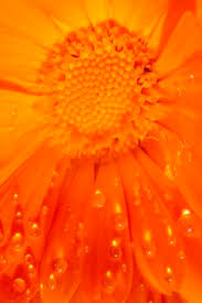 hues of orange orange quenalbertini orange color orng pinterest
