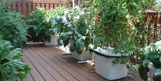 Deck Garden Ideas Welcome To Above Ground Farming Journal