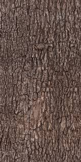 tree bark texture pattern by ivangraphics on deviantart