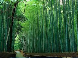 57 best Bamboo images on Pinterest