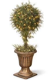 national tree co mini tea leaf 1 topiary tree in urn