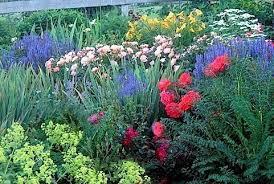 excellent idea cut flower garden nice design the best flowers for