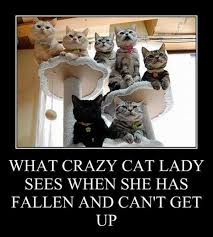Crazy Cat Memes - crazy cat woman funny meme bajiroo com