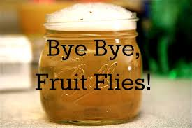 fruit flies in sink how to get rid of fruit flies suburban turmoil