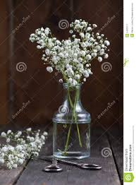 wild flowers in wild meadows fresh wild meadow white flowers in mason jar stock photo image