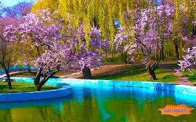 park sakura blossoms screensaver u0026 animated desktop wallpaper