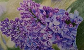 how to draw lilacs speed drawing colored pencils youtube