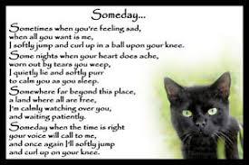 pet bereavement black cat pet bereavement memorial sympathy rainbow bridge magnetic