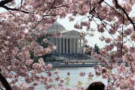 National Cherry Blossom Festival by The Top 10 Festivals The Second Weekend Of April 2015