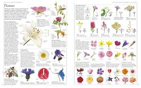 flower encyclopedia rhs a z encyclopedia of garden plants dk 9780241239124