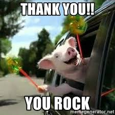 You Rock Meme - thank you you rock geico pig meme generator