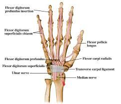 Tendon Synovial Sheath Medart The Carpal Tunnel Syndrome U003cbr U003e By Georgios D
