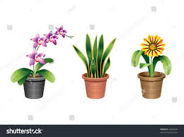 indoor office plants 2 stock vector 76666846 shutterstock