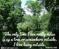 25 best tree quotes sayingimages