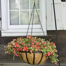 amazon com cobraco black 14 inch english flatwire hanging basket
