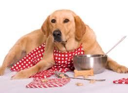 cuisiner pour chien a table 3 recettes maison pour chiens fanimo
