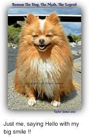 Benson Dog Meme - benson tbe dog the mytb the legend benson the dog the myth the