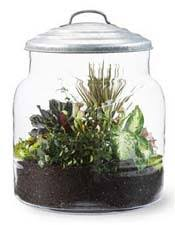 nasa climate kids make a terrarium mini garden