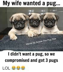 Happy Birthday Pug Meme - pug memes pictures 20 wishmeme