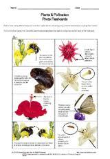 plant lessons printables u0026 resources k 12 teachervision