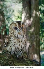 owl tree stock photos owl tree stock images alamy