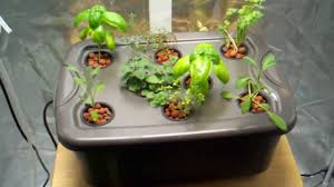 Hydroponics Vegetable Gardening by Indoor Hydroponic Herb Garden 6 Kinds Of Hydroponic Gardening