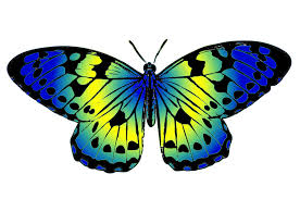 Blue And Green Butterfly - butterfly clipart blue and green pencil and in color butterfly