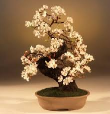 the flowers and branches of this artificial tree are created from