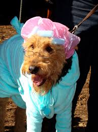 Dog In Shower by 20 Dogs In Halloween Costumes Dog Halloween Halloween Costumes