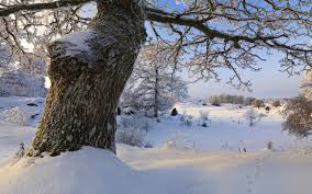 winter amazing great trees landscape splendor tree beautiful