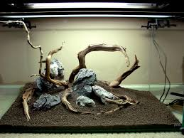 aquascaping layouts with stone and driftwood branchy driftwood layouts aquascaping aquatic plant central