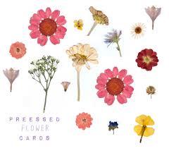 pressed flowers pressed flower cards flowers flower tree and flower