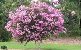 albero giardino alberi da giardino ng1 jpg