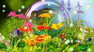 flower bubble colorful walpapers flowers colors butterflys life