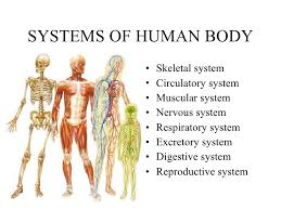 Human Anatomy And Body Systems 9 Human Body