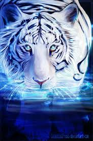 393 best white tigers images on white tigers bengal