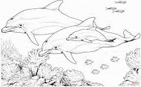 dolphin coloring pages coloring pages coloring pages