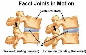 Anatomy Of Vertebral Body Facet Joints Of The Spine U0027s Anatomy
