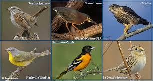 birds pulaski county usa